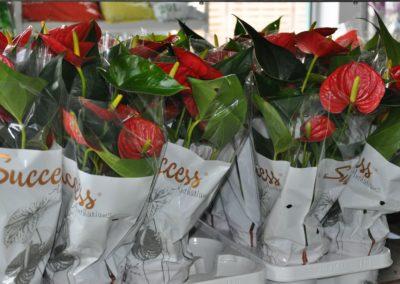 kwiaty-doniczkowe-zamosc_05