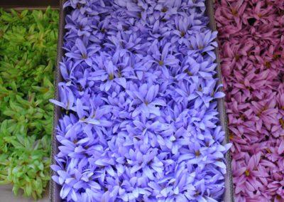 kwiaty-sztuczne-zamosc_12